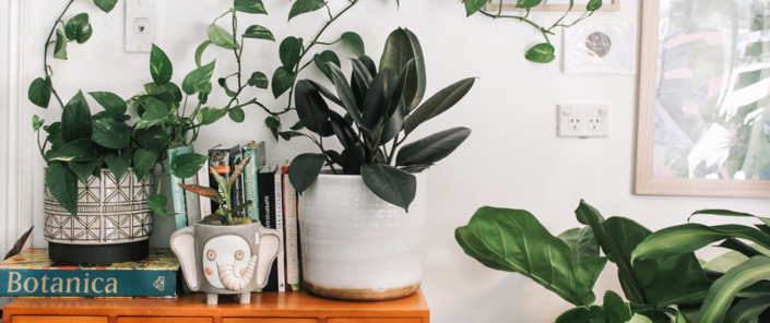 Indoor Plants Improve Air Quality -Living Nontoxic with Dee Davidson Blog